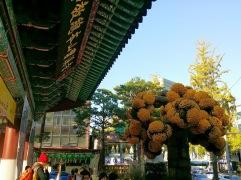 Chrysanthemum tree