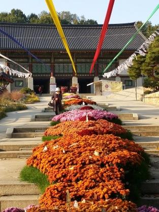 Chrysanthemum display