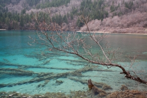 Trees in water (Sichuan national park)