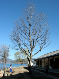 Sleeping winter (Lake Lugu)