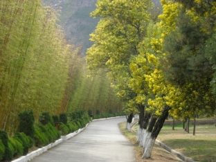 Leading Trees (Yunnan)