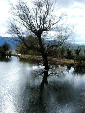 Tree in lake (Yunnan)