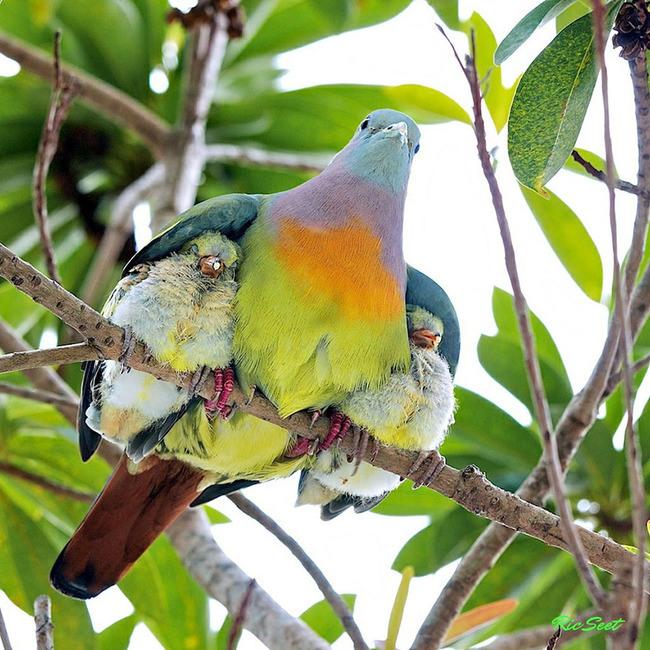 A mother bird'srevenge