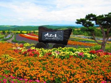 Flower farm Hokkaido