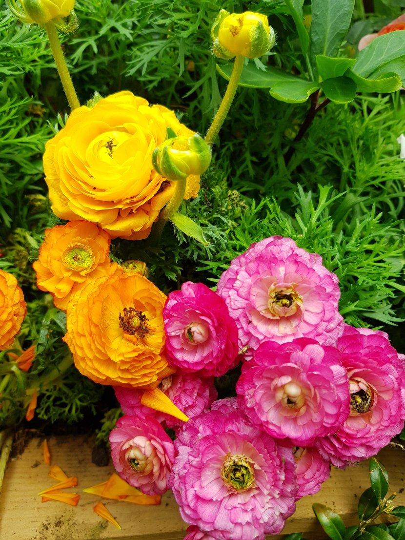 Sensual flowers