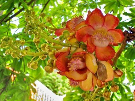 sala flower
